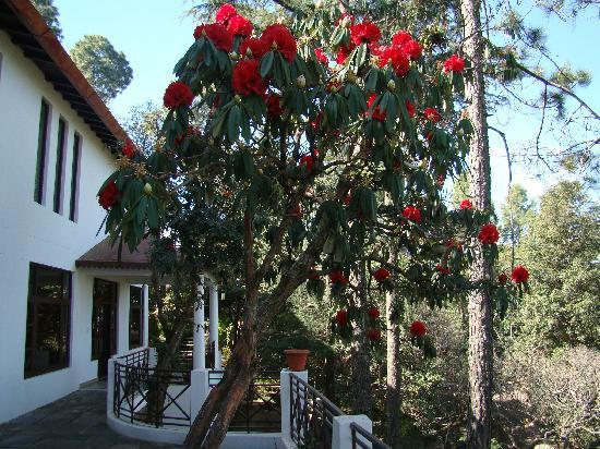 Kassar Jungle Resort Almora